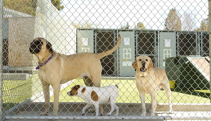 commercial-kennel