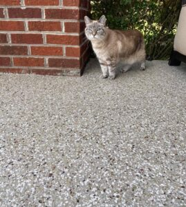 Galaxy Patio Coating Cat